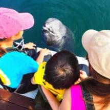 イルカと泳ぐ夢。