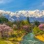 白馬連峰と枝垂れ桜 …