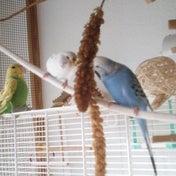 私と鳥とバードシッターさん