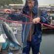 雨でも青物釣れてます…