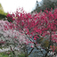 故郷の春と北海道の春