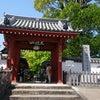 乙訓寺の牡丹の画像
