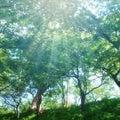#清々しい朝の画像