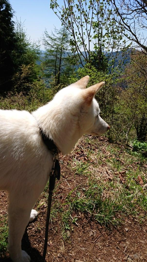 川より山派~武甲山ハイキング ...