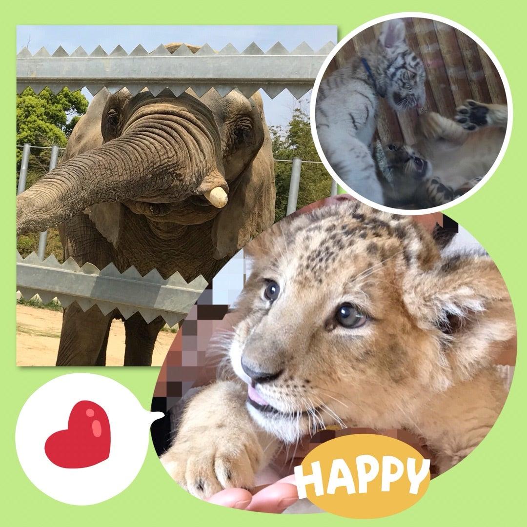 (*゚ヮ゚*). ここはふれあいに力を入れた動物園で. 園内の動物はだいたい触れることができました.  {9E4C375B,6769,4322,B72C,34D09FB8003E}