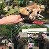 たぶん日本一自由にふれあえる動物園の画像