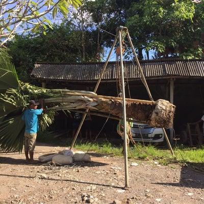 Bali 我が家の植木事情の記事に添付されている画像