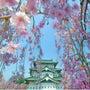 桜 弘前城 晴れ