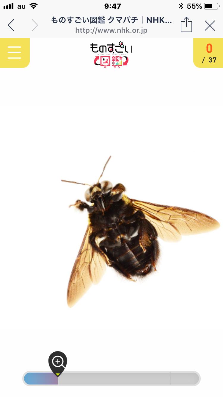 ものすごい図鑑 クマバチ