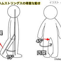 ポッコリお腹と股関節を内旋させる筋肉④半腱様筋⑤半膜様筋の記事に添付されている画像