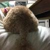 愛犬の後ろ姿の画像