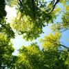 5/10(木) 銀座英会話サークルとコラボでの活動の画像