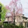 桜の季節の画像