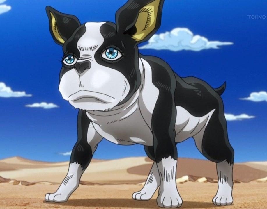 イギー 犬種