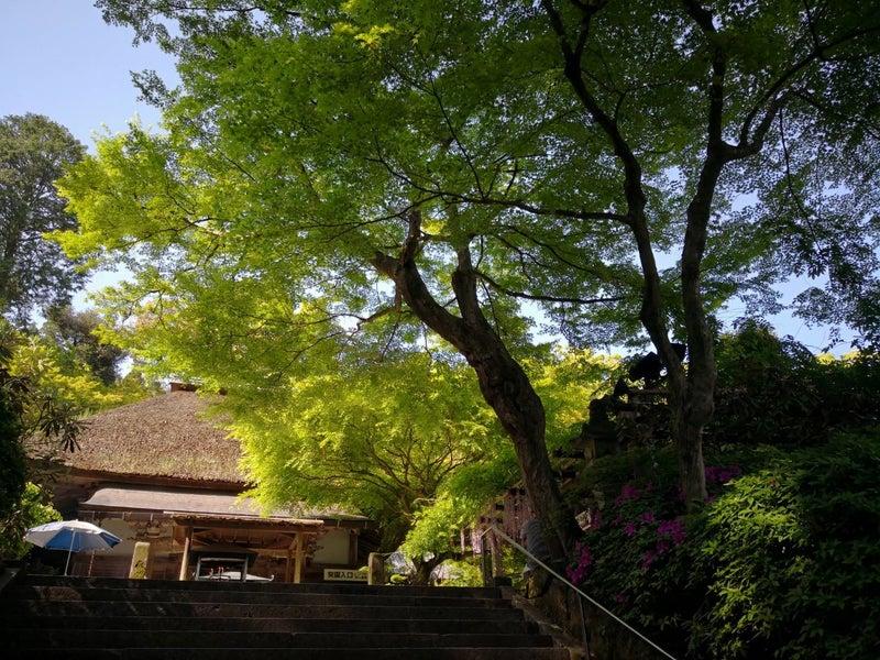 大興善寺 ツツジ寺 新緑と藁ぶき屋根