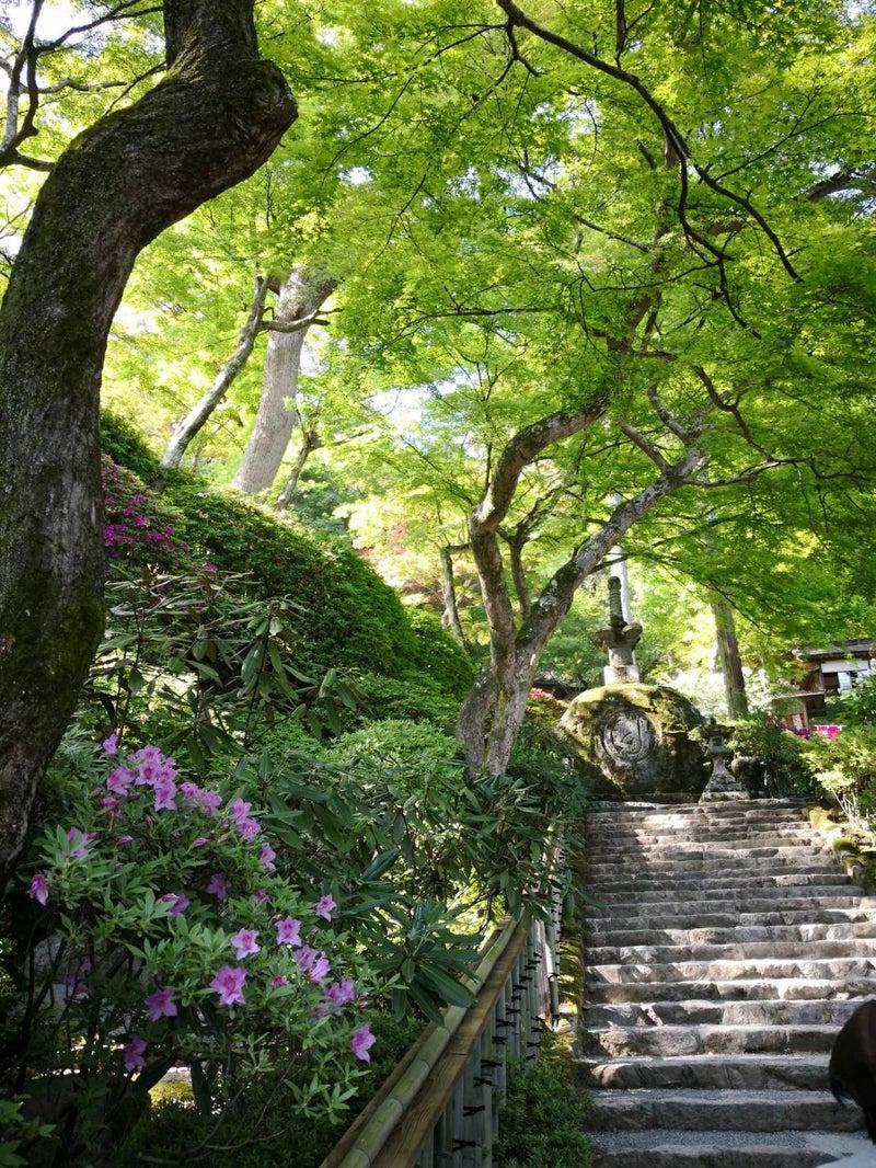大興善寺 ツツジ寺 宝篋印塔へ続く石段