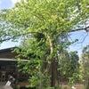 7月26日(木)森の中でマヤ暦フェスの画像