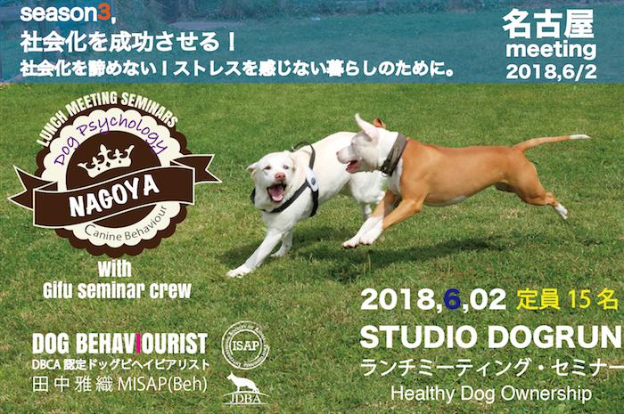 Healthy Dog Ownership