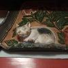発見!眠り猫の画像