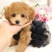 2月19日生まれ♡タイニー予想の女の子♡