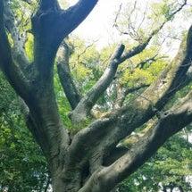 聖木の叡智
