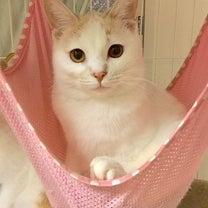 2月24日(日)参加ねこちゃんのご紹介 サラちゃんの記事に添付されている画像