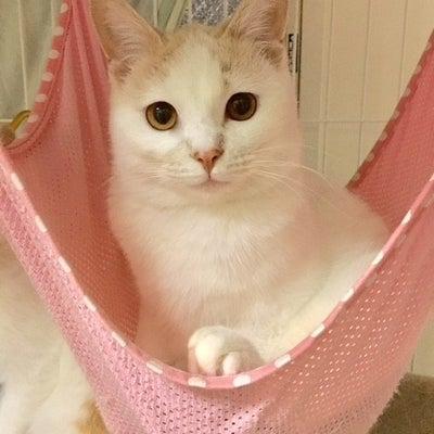 11月11日(日)参加ねこちゃんのご紹介 サラちゃんの記事に添付されている画像