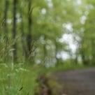 阿蘇には 春がありました 雨の阿蘇は静かですの記事より