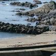 今朝の答志島大間の浜