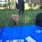 愛犬とピクニック♪の記事より
