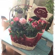 ミニ薔薇の鉢植え♬