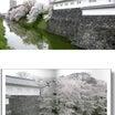 南東北桜巡り⑪・・・霞城公園