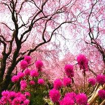 桜***いまごろ( ´_ゝ`)の記事に添付されている画像