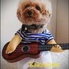 今度はギタリストに?!愛犬柿ちゃん◆KiyoのDiaryの画像