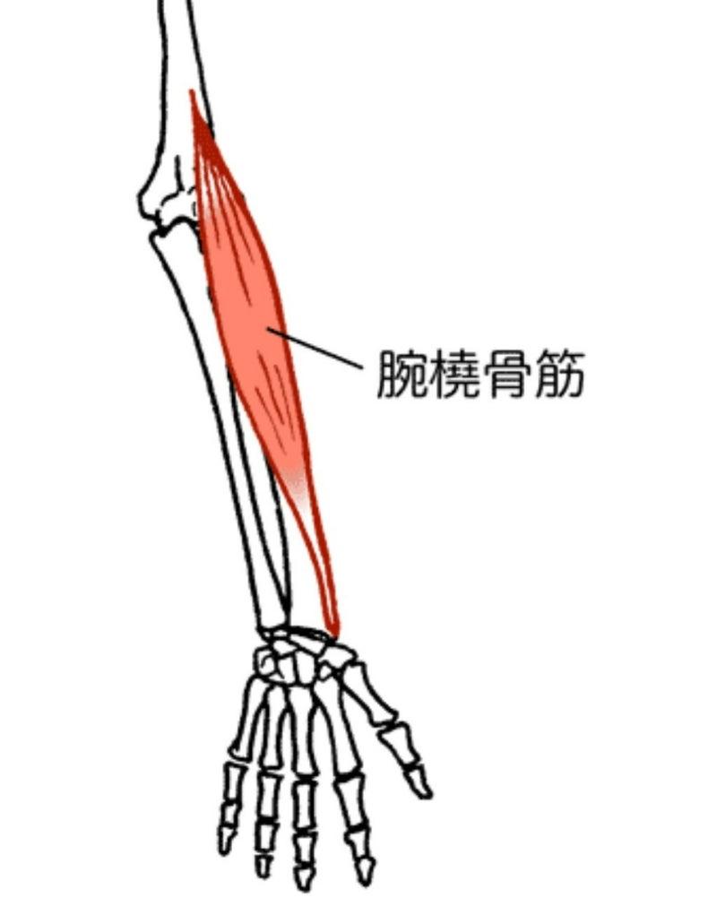 腕橈骨筋 | 長尾雄太の凸凹治療...