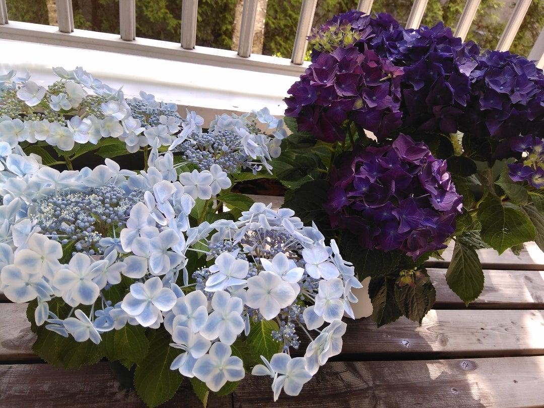 花咲く5月はいろいろと……!の記事より