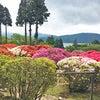 箱根の春便り♪の画像