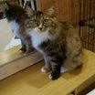 リアル猫活動「虐待された猫の変化❗❗」