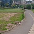 昨日の散歩道