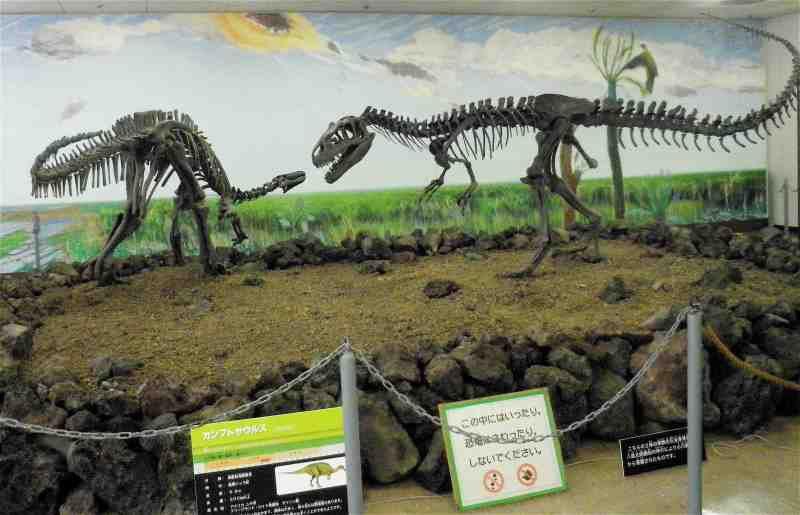 宝山ホール4階『カンプトサウルスとアロサウルスの全身骨格の化石』の ...