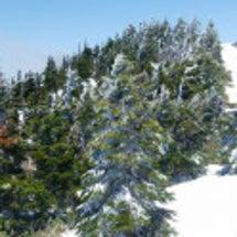 昨夜は雪が降りました…