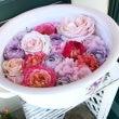 満開の美しいバラの花…