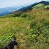 ハチと♡生石高原の画像