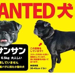 画像 迷子犬 サンサン 探しています! の記事より