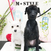 MIX犬の めーちゃん&ぷーちゃんの画像