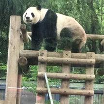 「上野動物園」に行っ…