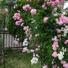 庭の薔薇アーチと国際バラとガーデニングショウへの画像