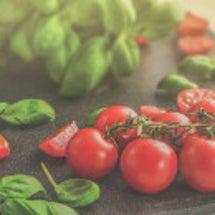 トマトの育て方に学ぶ…