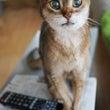 キラキラな瞳
