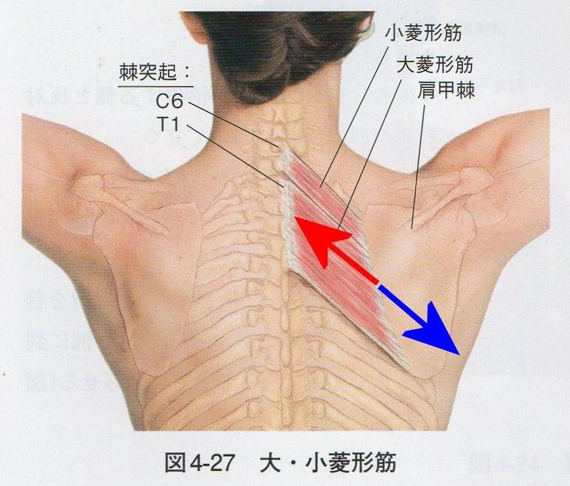 肩 甲骨 の 内側 が 痛い